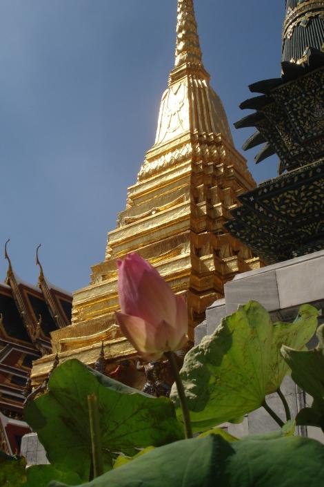 Flor de lótus, presente em todas as oferendas nos templos.