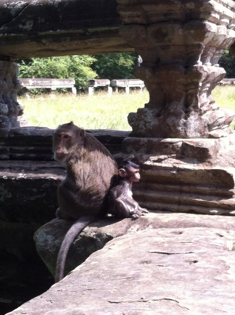 Moradores do complexo de Angkor Wat