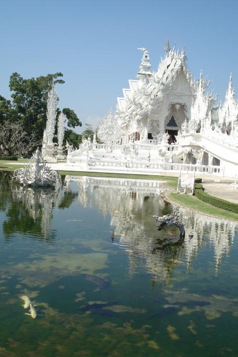 Detalhe dos peixes brancos no lago do templo.