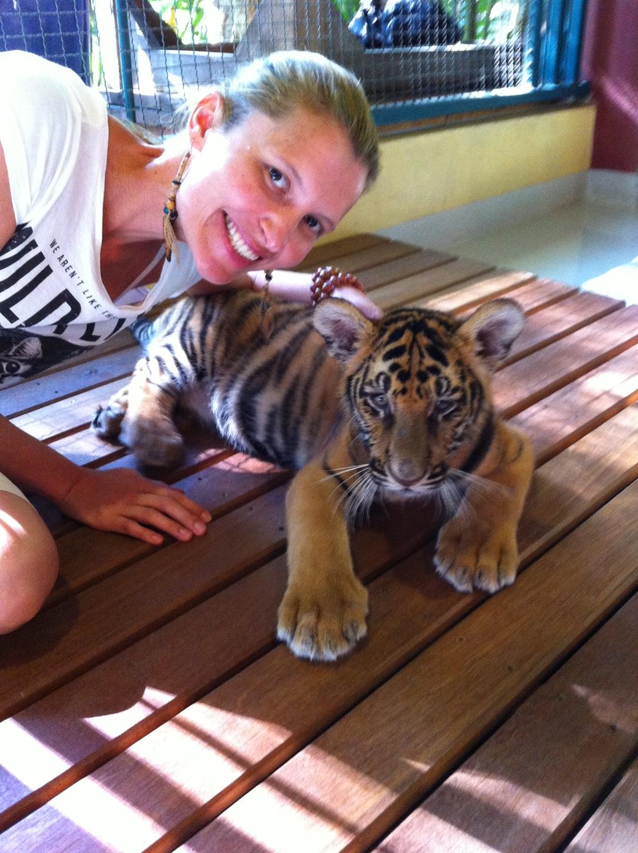 Os tigres bebês são os mais simpáticos e brincalhões.