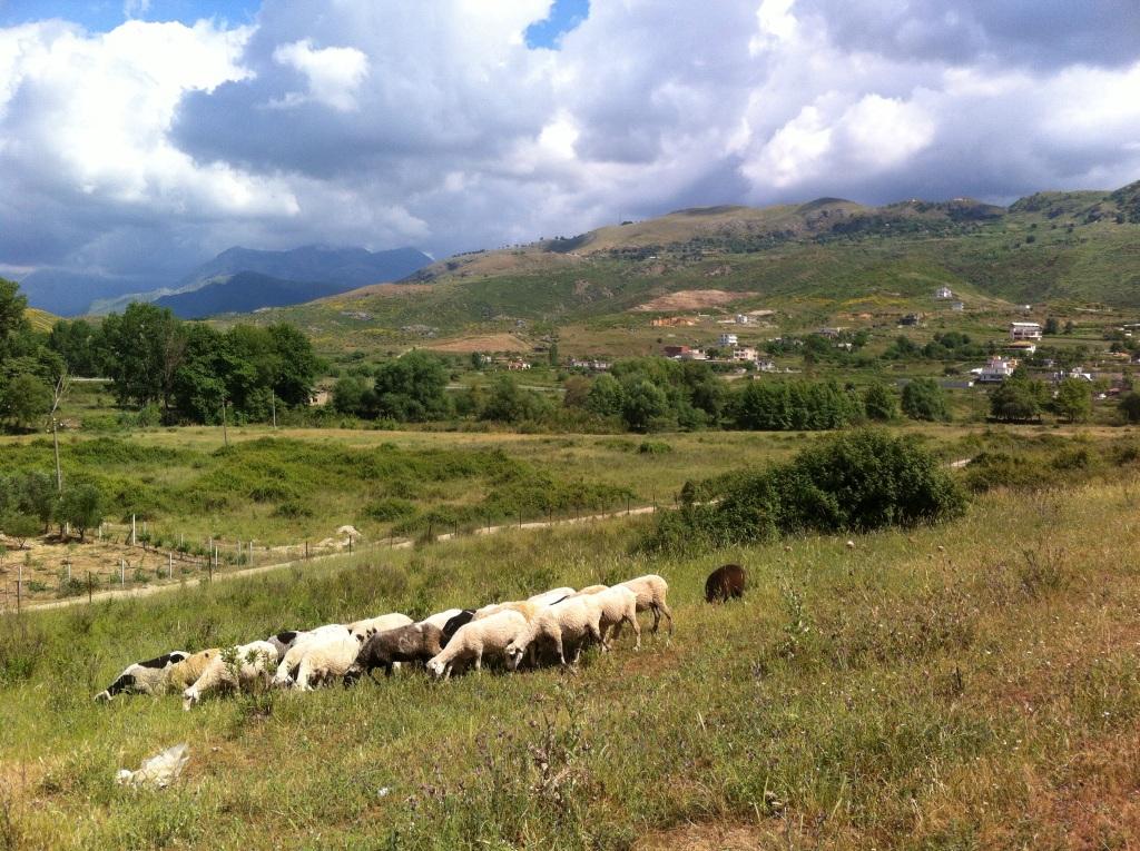 Campos de Pastoreio