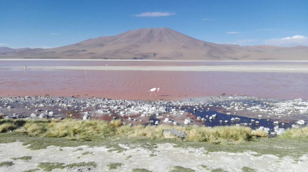 Lagoa Colorada com os flamingos.
