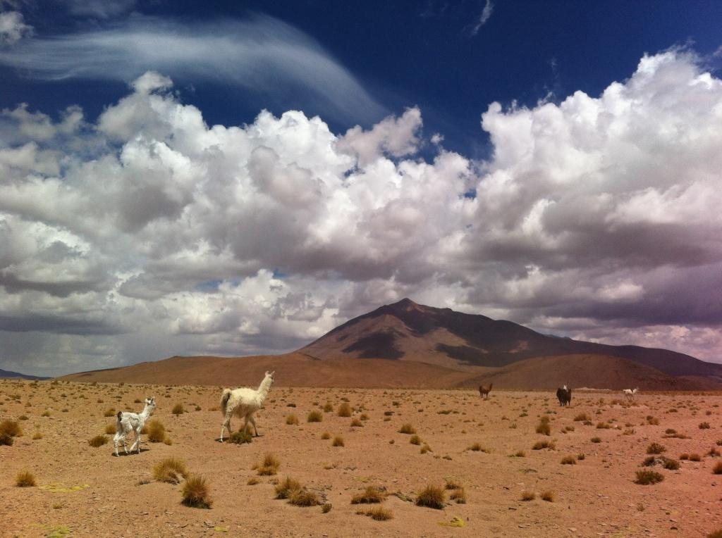 Paisagem do altiplano boliviano com as suas famosas llamas.